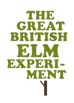 The Great British Elm Experiment